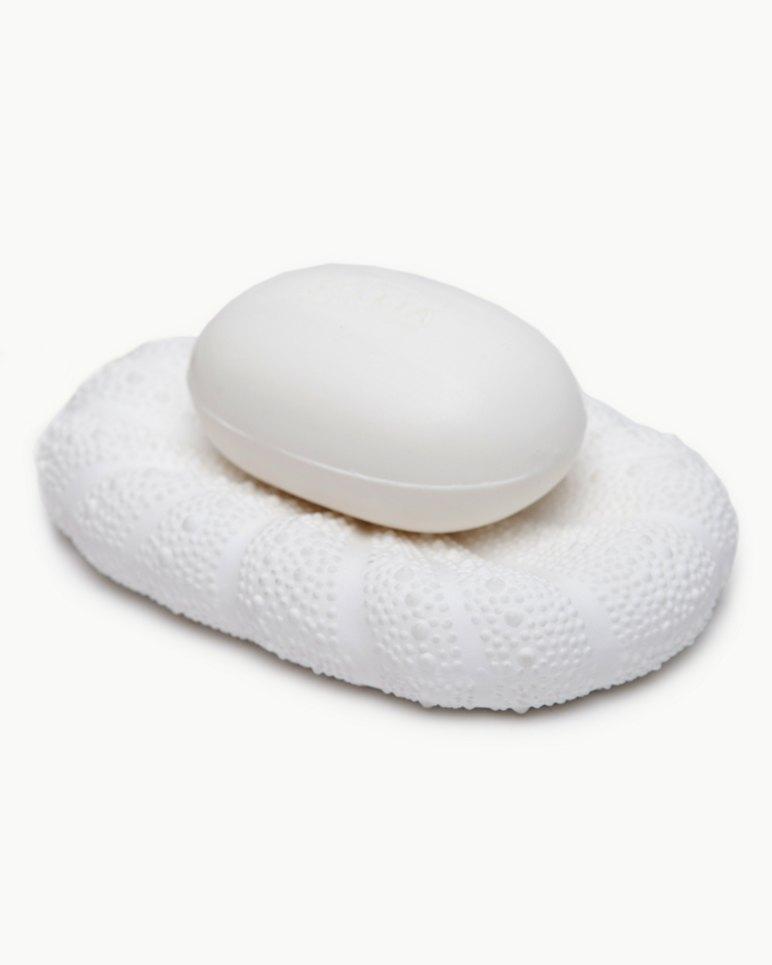 Main Image for Sea Urchin Soap Dish